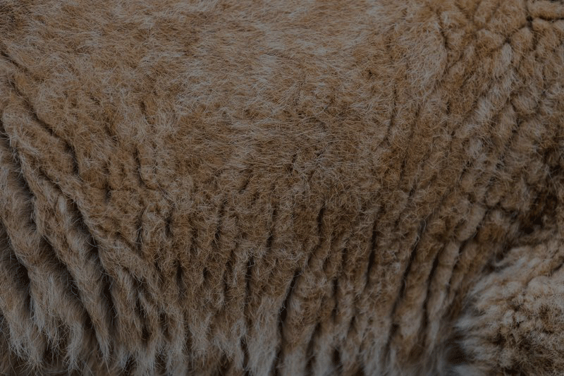 Lion Cub Skin for leather